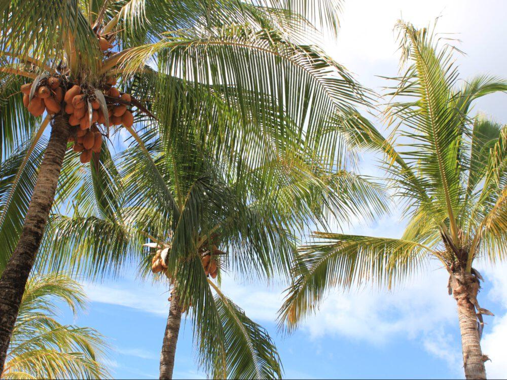 Strand Jan Thiel Curacao