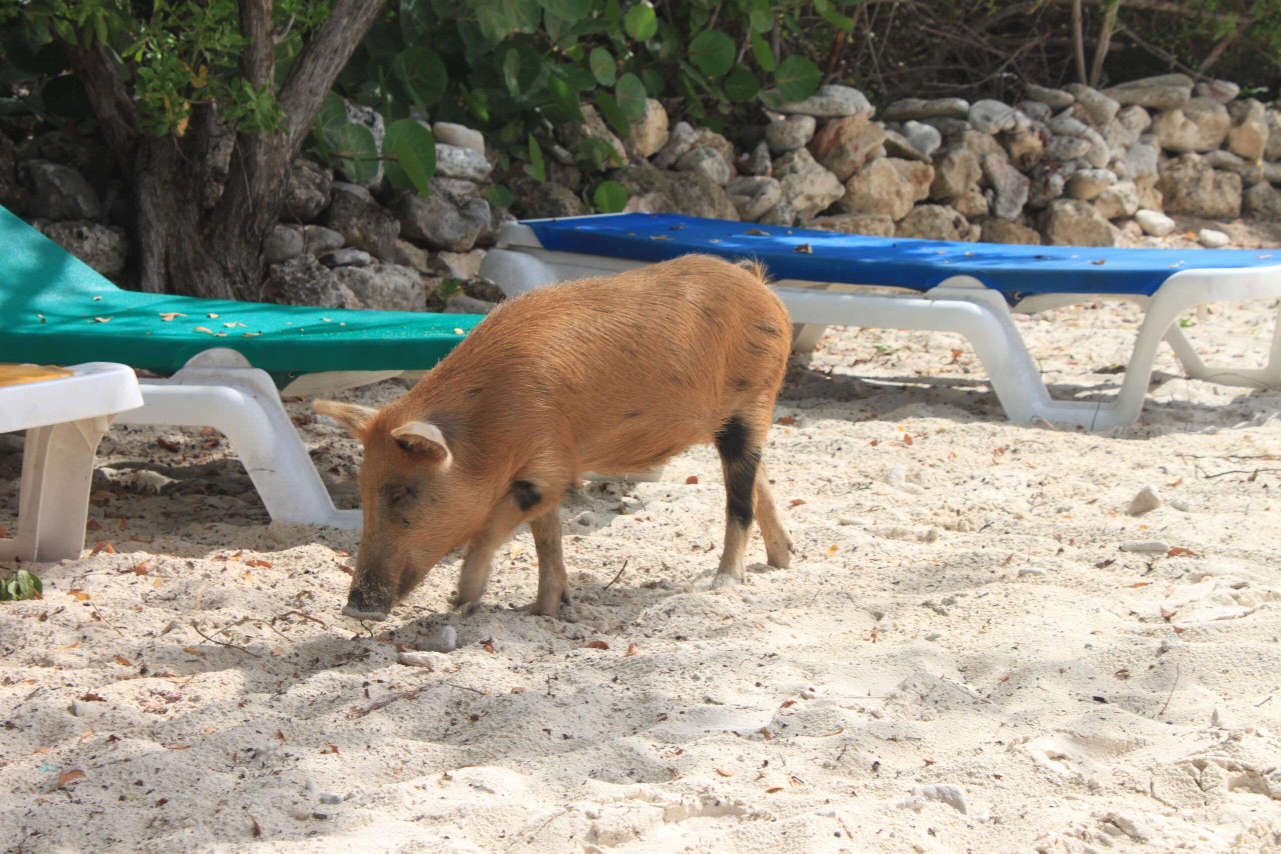 playa porto marie varkentjes